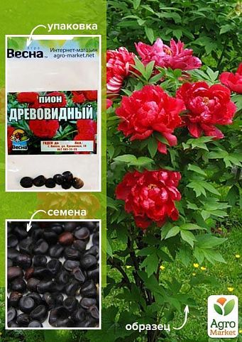 """Півонія """"деревна"""" (червона) (насіння) ТМ """"Весна"""" 7шт"""