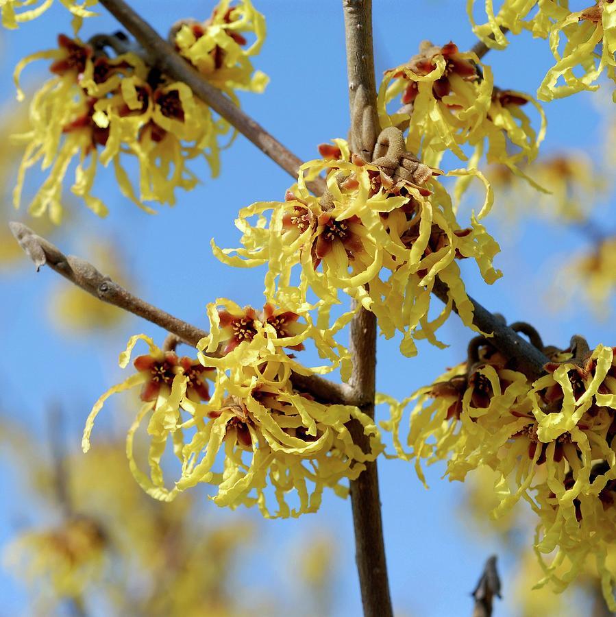 Найактуальніші Рослини Весняного Сезону - Ми рекомендуємо найкрасивіші рослини для Вашого Саду
