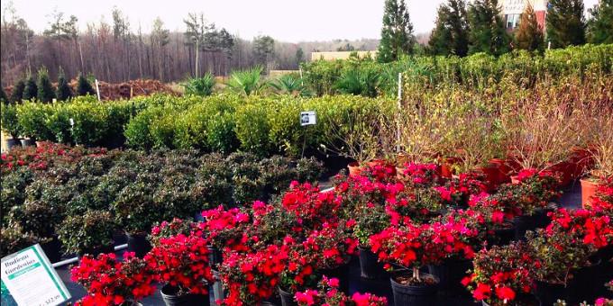 Чому погано приживаються саджанці з садових центрів - Почему плохо приживаются саженцы из садовых центров